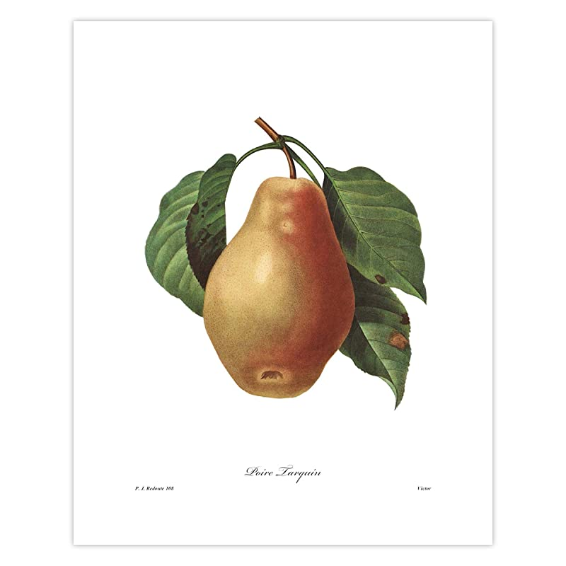 pear Redoute vintage botanical plate #108 Poire  Tarquin