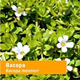 Herb Pharm Certified Organic Bacopa Liquid
