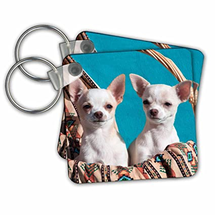 3dRose Chihuahua Puppies Pose in a Basket, MR - Key Chains ...