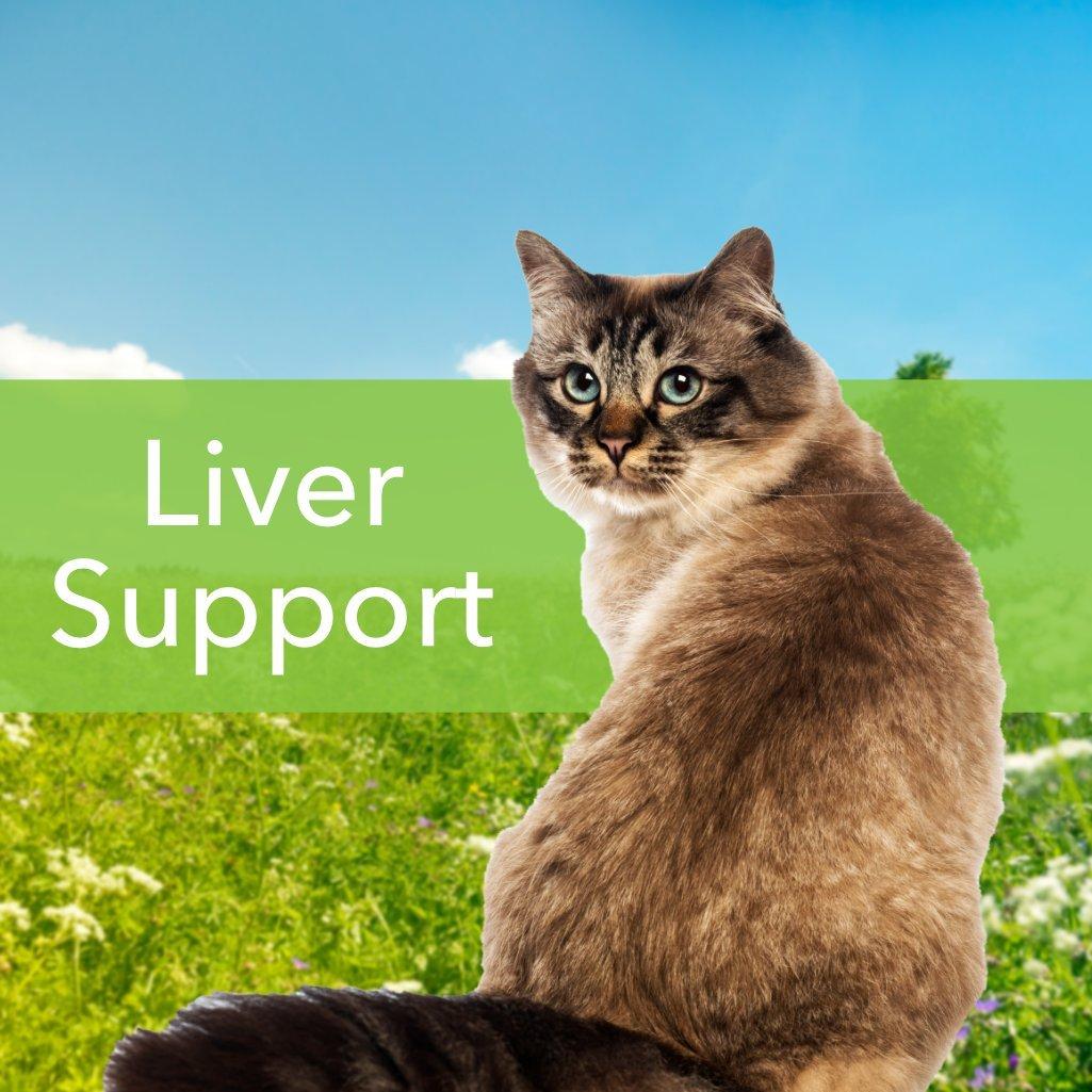 Pet Wellbeing - Cardo De Leche Para Gatos - Soporte Natural Para La Salud Del Hígado Felino - 2 Oz (59 Ml): Amazon.es: Salud y cuidado personal