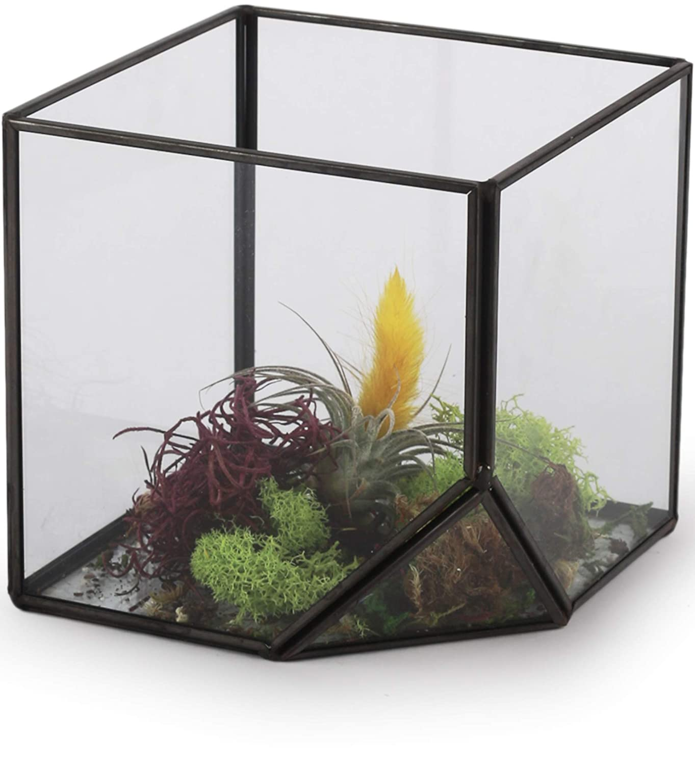 "Circleware 03501 Terraria Square Terrarium Clear-Glass with Metal Frame, Home Plant Decor Flower Balcony Display Box and Garden Gifts 4.13"", Black-4.13x4.13"