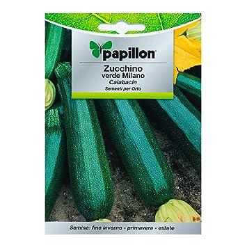 Semillas Calabacin Verde Oscuro (5 Gramos): Amazon.es: Jardín