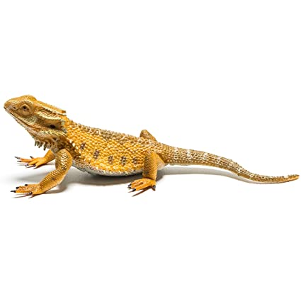 7507f913464 CollectA Bearded Dragon Lizard Toy Figure - Authentic Hand Painted Model