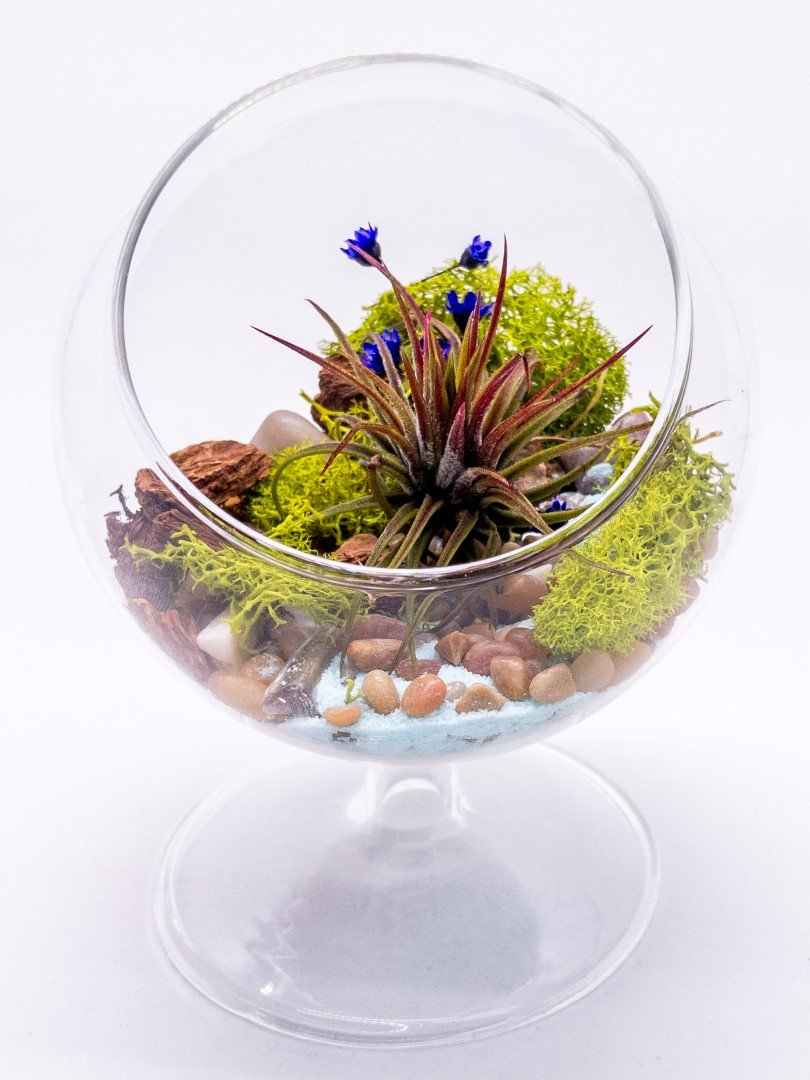 "Air Plant Terrarium Kit | Nature Series River's Edge | Complete Tillandsia Gift Set | 5"" Glass Globe with 3'' Pedestal 