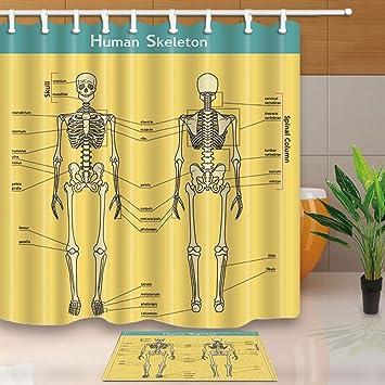 Anatomie der menschlichen knochenreste System Decor Vector ...