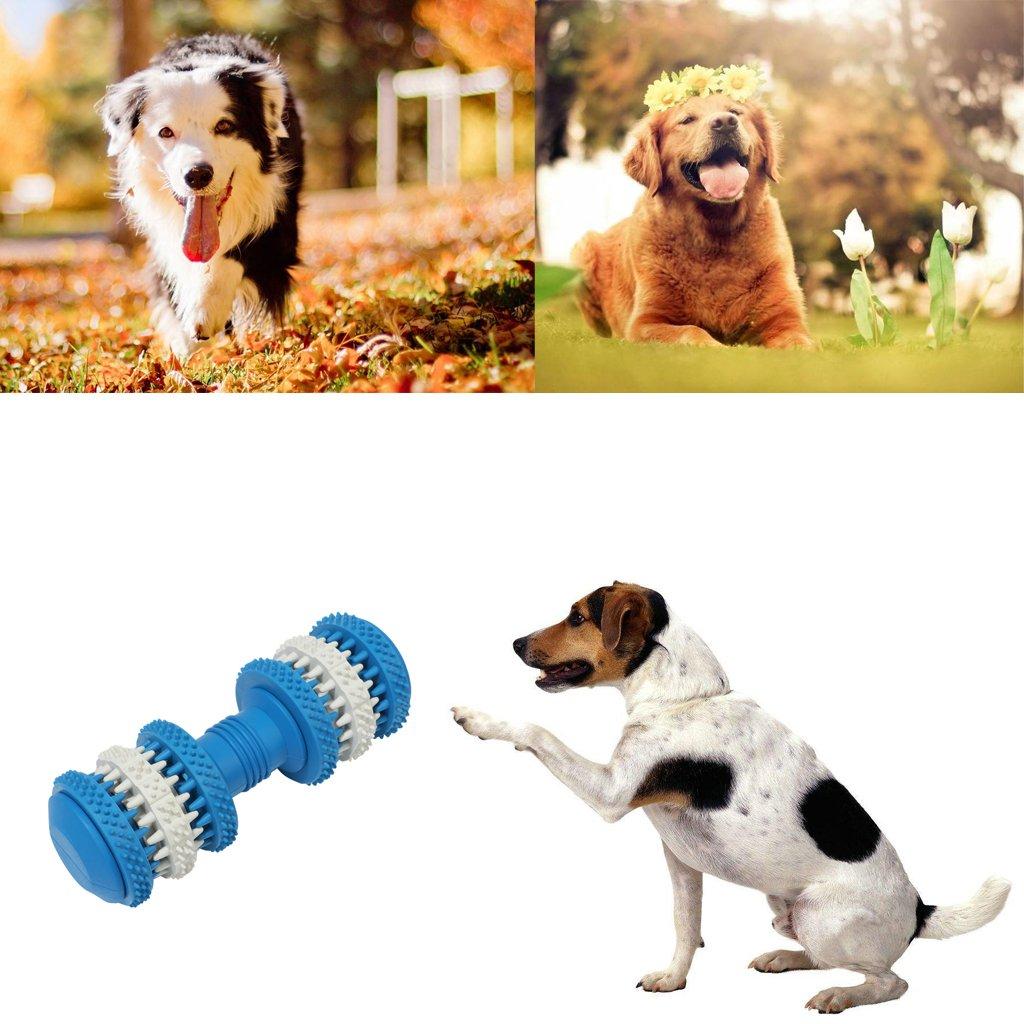 Homyl Juguete para Masticar con Mancuernas de Gato Perro Accesorios de Animal Doméstico Mordedor Cachorro: Amazon.es: Deportes y aire libre