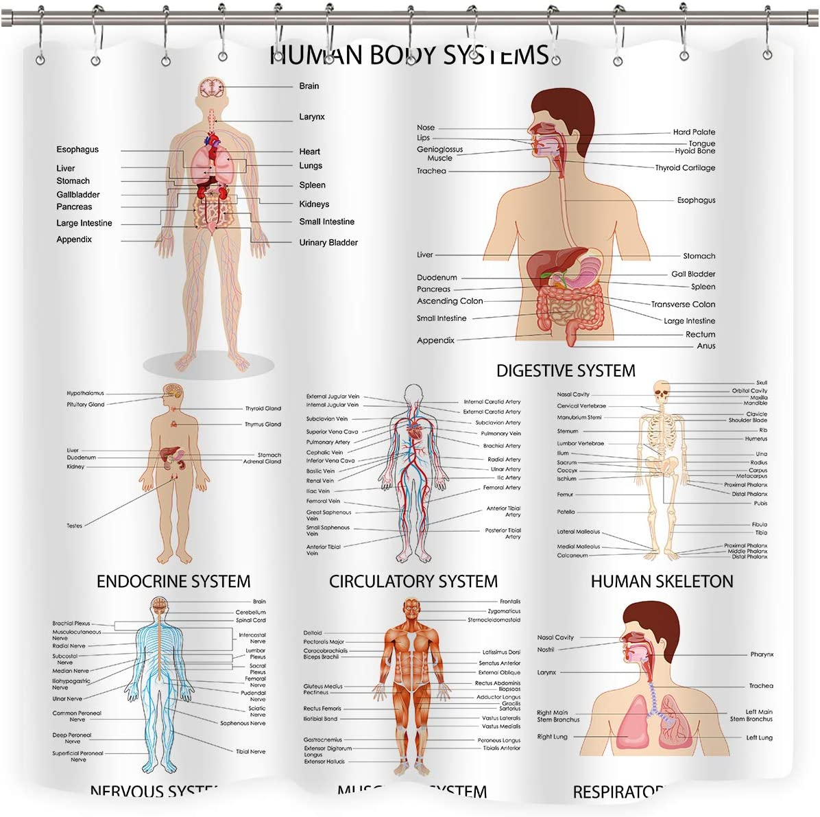 Riyidecor Human Organ Shower Curtain Anatomy Organ Body Structures Cell Life Medical Illustration Decor Bathroom Set Polyester Waterproof 72x72 Inch with Plastic Hooks 12 Pack