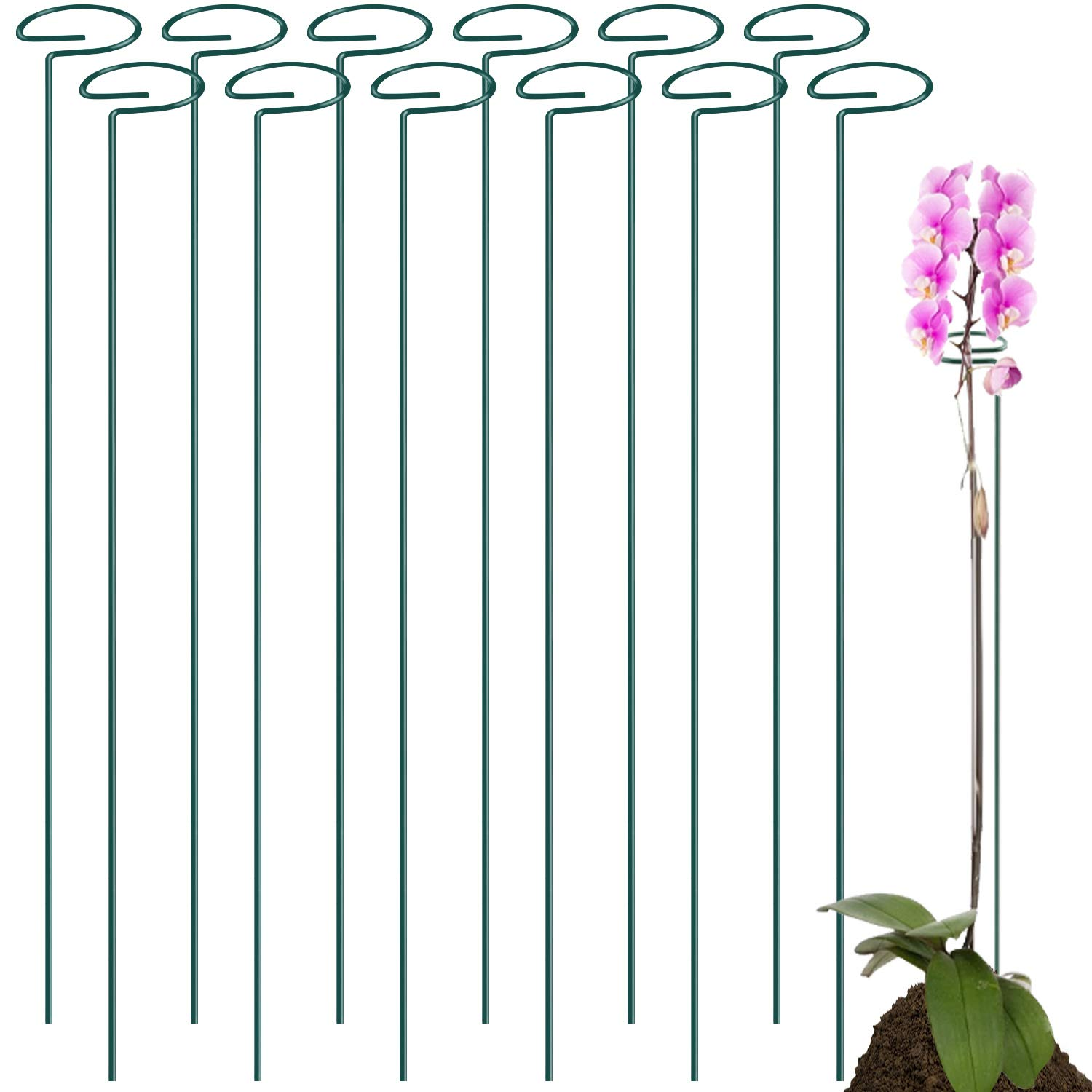 12 Pack 36 Inch Plant Support Stakes ,Single Stem Plant Support Stake Single Plant Stem Garden Flower Support Stake Steel Plant Cage Support Ring für Amaryllis Rose Pepper Plants Lily Tomatoes Peony