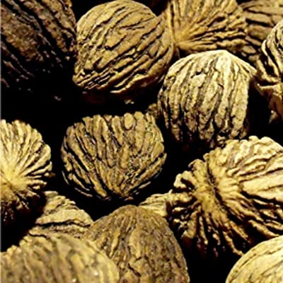 Plant Details About Tall Seedling Black Walnut Tree nut producing Tree Live : Garden & Outdoor