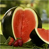 Package of 100 Seeds, Sugar Baby Watermelon (Citrullus lanatus) Seeds by Seed Needs