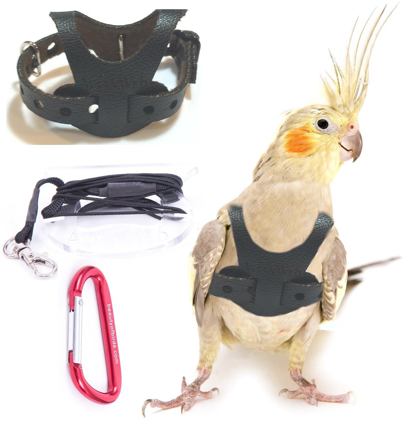 Avianweb EZ Rider Bird Harness with 8 Ft Leash (Cockatiel) by Avianweb