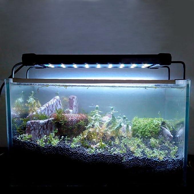 Petamo® 6W 36 LED Lámpara Ultrafina Luz Blanco Azul + 2 Soporte para Acuario Pecera: Amazon.es: Hogar