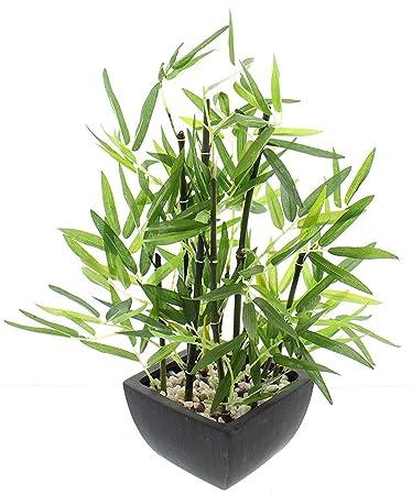 Khevga Deko Bambus Pflanze Im Topf Amazon De Kuche Haushalt