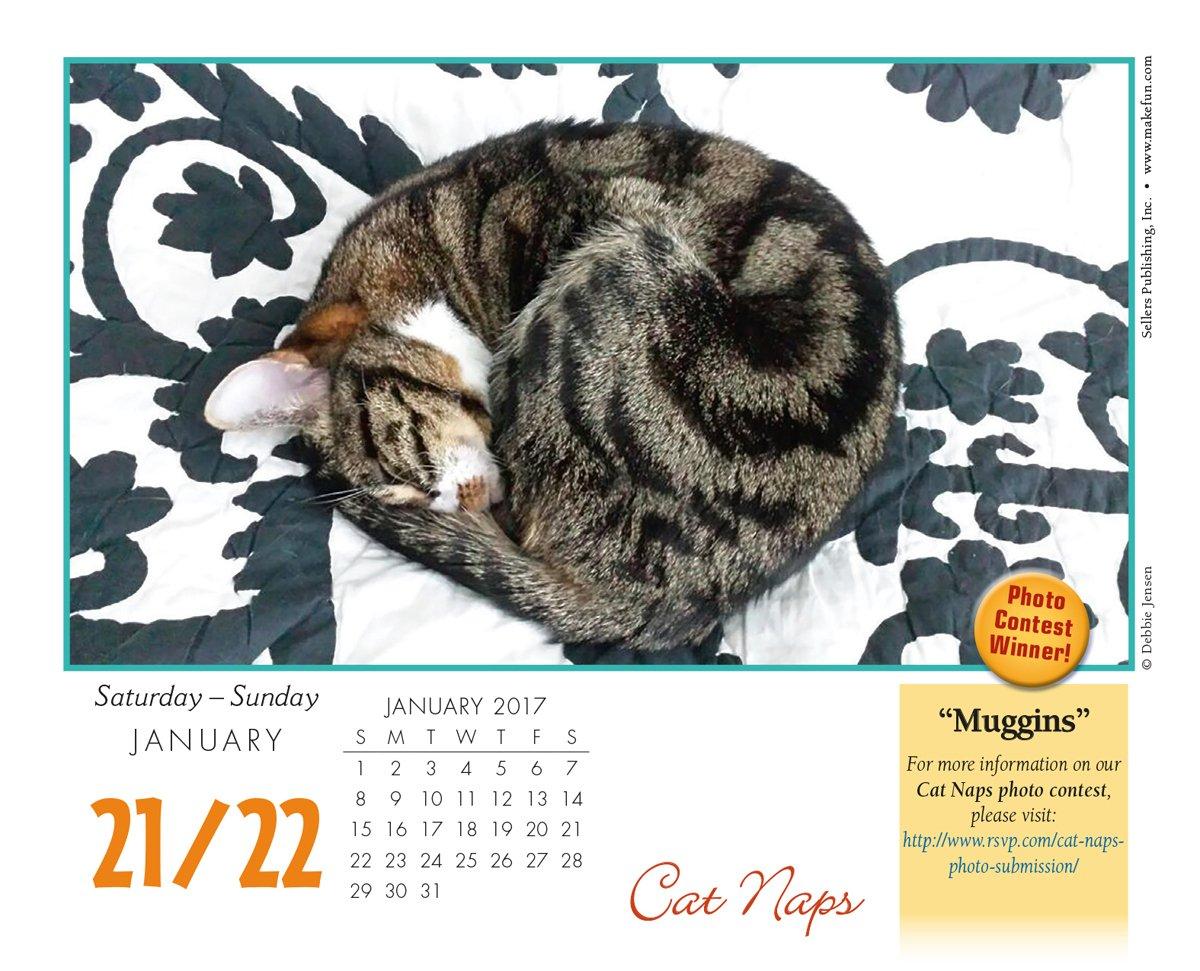 Cat Naps 2017 Boxed//Daily Calendar