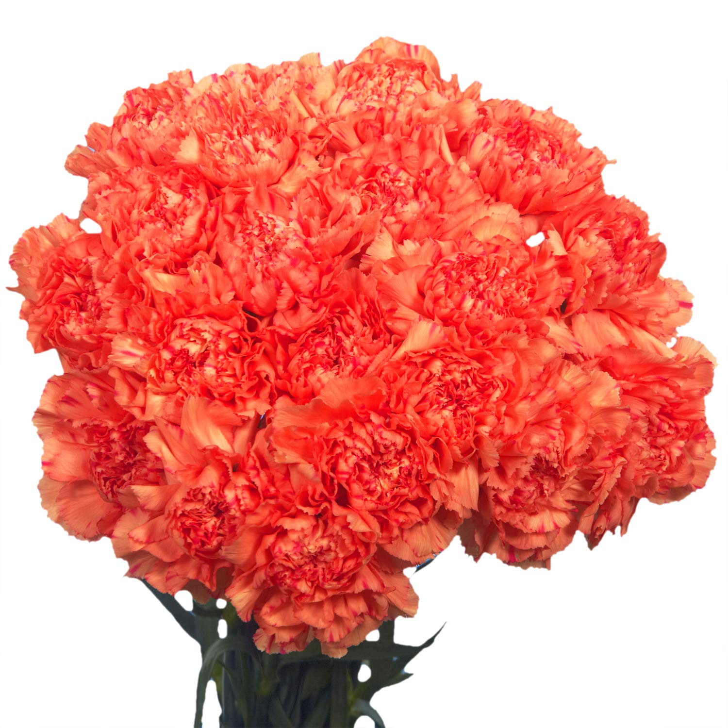 GlobalRose 100 Fresh Cut Orange Carnations - Fresh Flowers Wholesale Express Delivery by GlobalRose (Image #1)