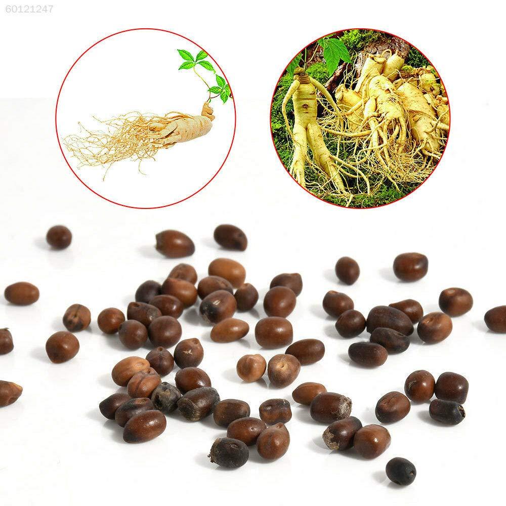 3Fa1 Am/énagement paysager Jardin Embellir Seedsing Garden Supplies Facile /à cultiver Graines Paquet Non Plantes