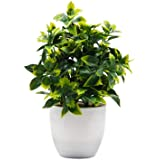 OFFIDIX Plantas artificiais Mini Plantas de Plástico Eucalipto Pote para Decoração de Escritório Doméstico, Plantas de Plásti