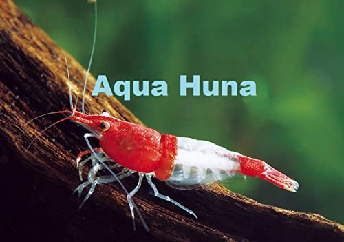 Aqua Huna Red Rili Shrimp