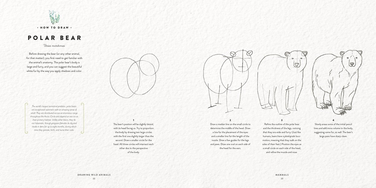 drawing wild animals essential techniques and fascinating facts for