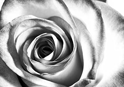 Carta Da Parati Rosa Bianca : Wandmotiv24 carta da parati rosa bianca fiore m0233 xs 150 x 105