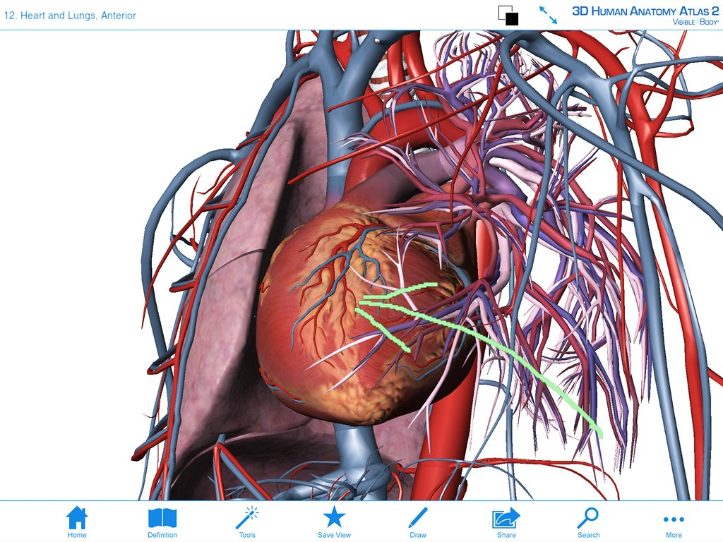 Best anatomy software for pc