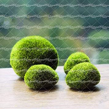 Decorative Moss Balls Uk
