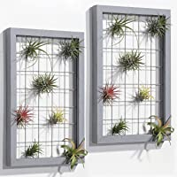 Air Plants Holders Wood Frame Air Plant Hanger for House Plants Succulents Tillandsia Display Wall Plant Holder Home…