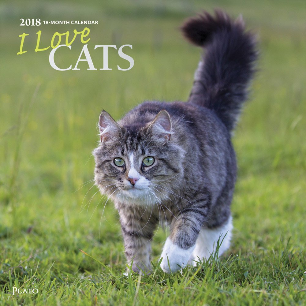 Read Online I Love Cats 2018 12 x 12 Inch Monthly Square Wall Calendar with Foil Stamped Cover by Plato, Animals Domestic Cats PDF