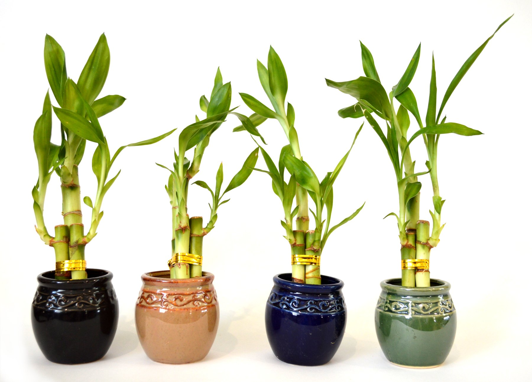 Amazon 9greenbox lucky bamboo glass vase and pebbles live 3 style party set of 4 bamboo plant arrangement w ceramic vase reviewsmspy