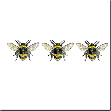 Three bees greeting card blank birthday card amazon office three bees greeting card blank birthday card m4hsunfo