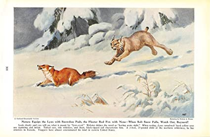 Amazon com : Print Ad 1943 Nature Equips the Lynx with