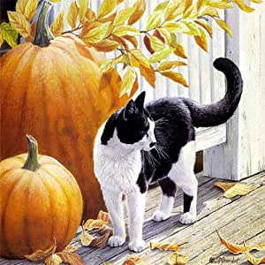 YQOQY Pintura por número Kit Gato Blanco y Negro de