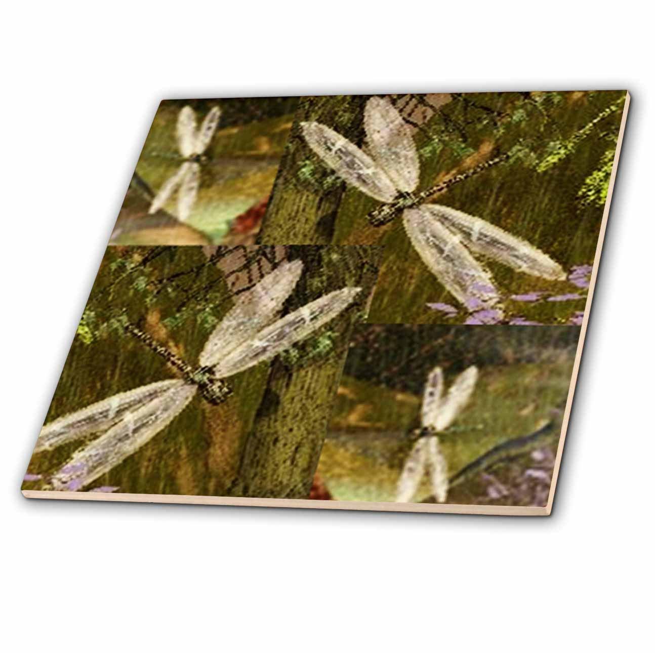 8-Inch 3dRose ct/_31624/_7 Dragonflies Graphic Design Dragonflies-Glass Tile