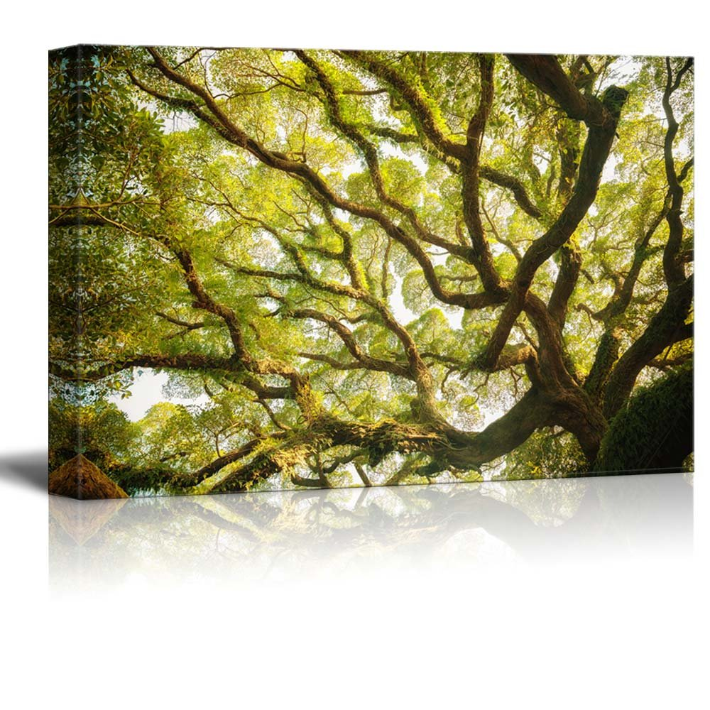 Ancient Banyan Tree Nature Beauty Wall Decor ation - Canvas Art | Wall26