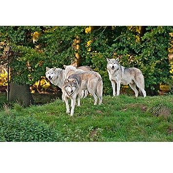 3 D Espacio Juego Wolfsrudel - En el Bosque, 2erSet, Juego de mesa ...