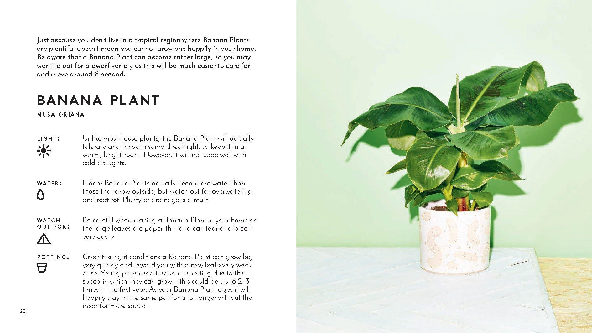 Little Book Of House Plants And Other Greenery Amazon De Sibley Emma Fremdsprachige Bucher