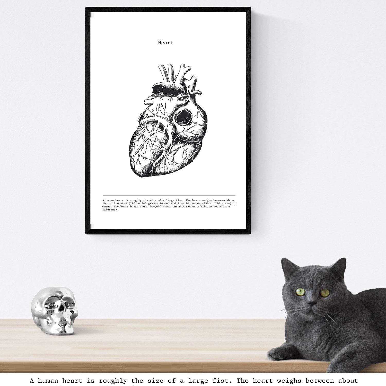 Hirn-Herz-Lungen menschliche K/örper A4-Format Packen Anatomie Plakate Anatomie Klingen mit menschlichen K/örperteilen