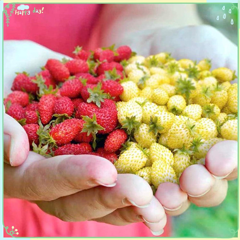 zellajake Fruit Plant Seeds 200+ Strawberry Seeds - Red White Wild Mix