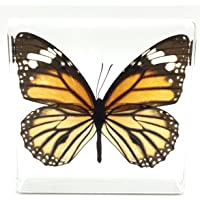 "Tiger Butterfly Paperweight Paperweights Specimen Specimens Collection Display(3""x3""x1"")"