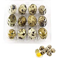 Quail Egg Cartons,50 Pack of 12 Grids Small Eggs Carton Holders for Quail Pheasant Pigeon Eggs Storage