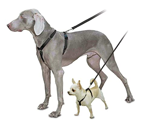 Amazon.com : PetSafe Sure-Fit Harness, Adjustable Dog Harness from