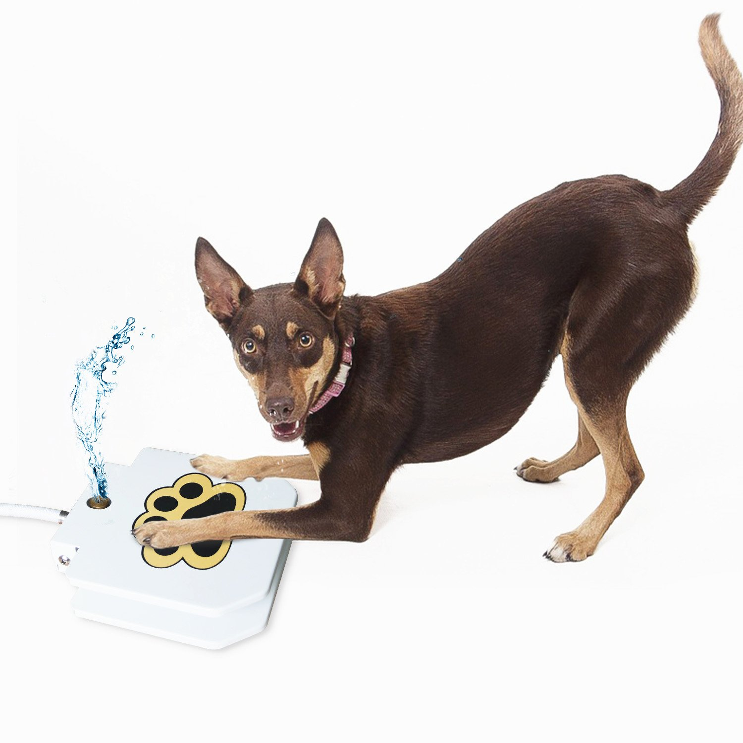MATOP Dog Water Fountain - Outdoor Step-On Dog Water Dispenser Automatic Dog Waterer with 40'' Hose For Dog Drinking Clean Fresh Cold Water Water Fountains Outdoor