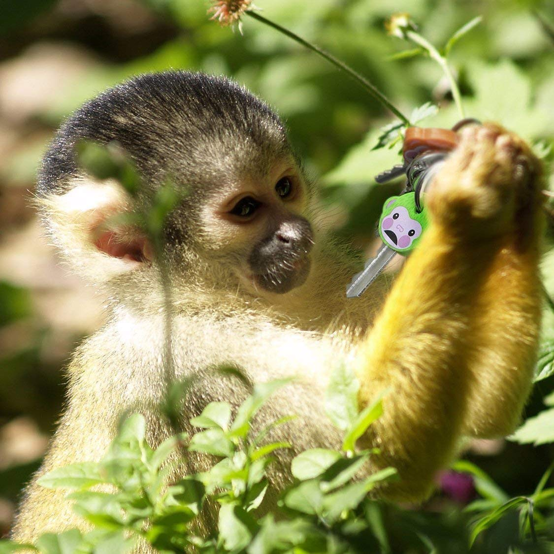 LHKJ 6 St/ück Niedlich Affen Monkeys Schl/üsselkappen Set