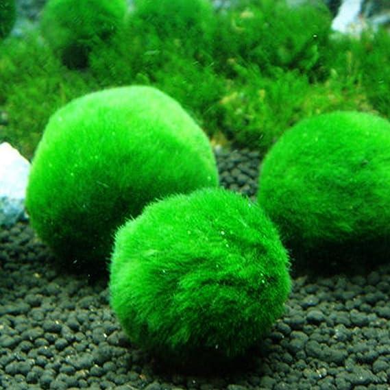CDKJ: Bolas de Algas Artificiales para Decoración de Acuario para peceras: Amazon.es: Informática