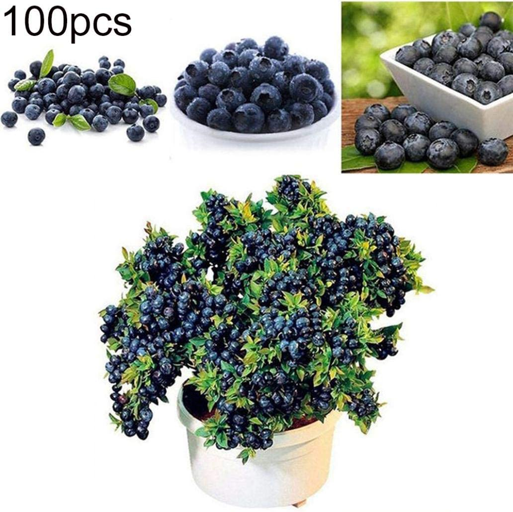Uticon Las Semillas Del ¨¢Rbol Del Ar¨¢Ndano 100pcs Deliciosa De La Fruta En Maceta De Bonsai Inicio Planta De Jard¨ªN - Semillas Blueberry