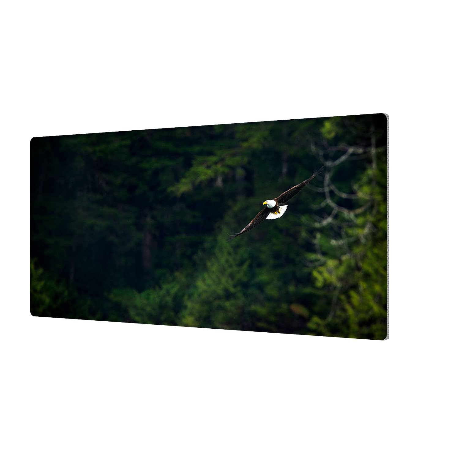 Aluminum Print 18X36 ArtWall James Thompsons Soaring Bald Eagle