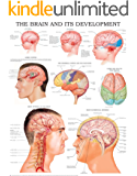 The brain and its development e-chart: Quick reference guide