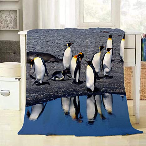 Mugod Penguin Throw Blanket King Penguins Living Wild At Parque Pinguino Rey Decorative Soft Warm Cozy Flannel Plush Throws Blankets For Baby Toddler Dog Cat 30 X 40 Inch Home