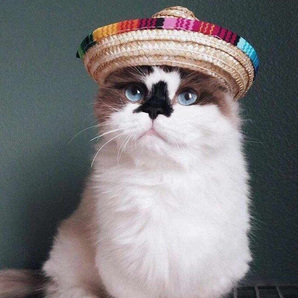 Wensltd Clearance! Pet Cat Dog Fashion Mexican Straw Sombrero Hat Pet Adjustable Buckle Costume (A)