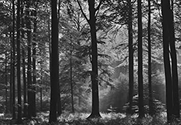 Avalon Black White Forest Photo Wallpaper Wall Mural Amazonco - Wallpaper for walls black and white